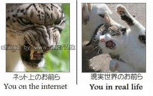 daily_picdump_530_640_100.jpg (640×404)